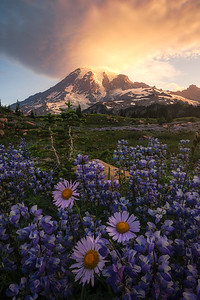 A beautiful sunrise at Mt Rainier - Washington