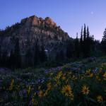 """""""Twilight Meadow"""""""