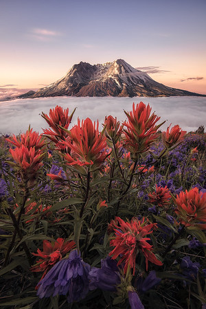 A rare cloud inversion during sunrise at Mt St Helens, Washington