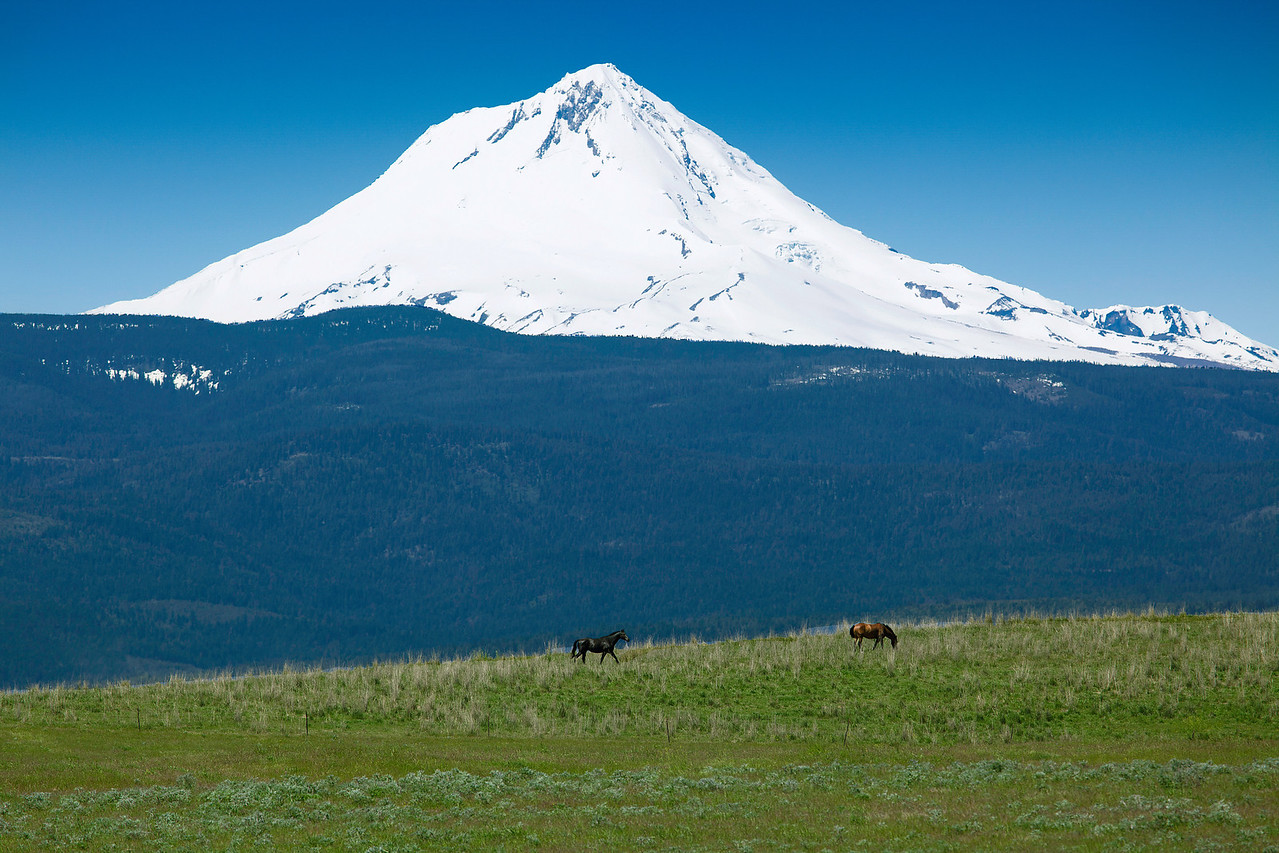 Mt Hood Horses - Two horses graze lazily in a pasture on the Eastern side of Mt Hood, Oregon.