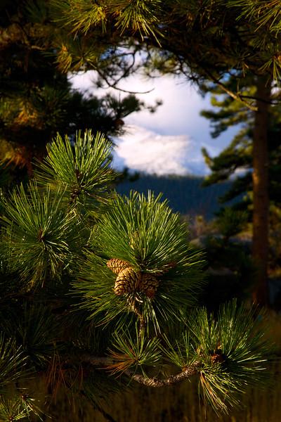 Front Range through the Pines