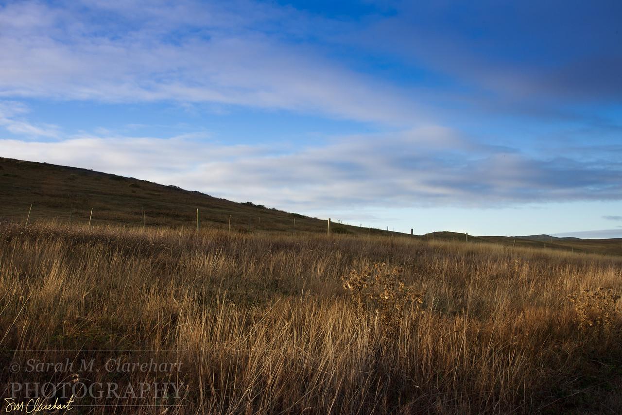 Estrero Trail IV