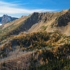 Grasshopper Pass Larches
