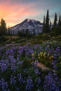 A smokey sunset at Rainier during wildflower season - Washington