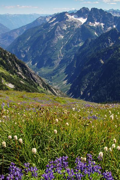 Summer Wildflowers & Mountains