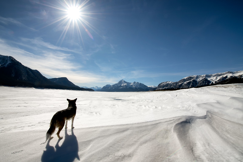 Tuzo at Lake Abraham