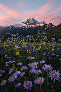 A beautiful sunrise above Mt Baker and a field of wildflowers
