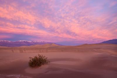 The Desert Burns - Varina Patel