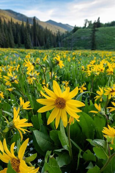 Keebler Pass Road Beauties