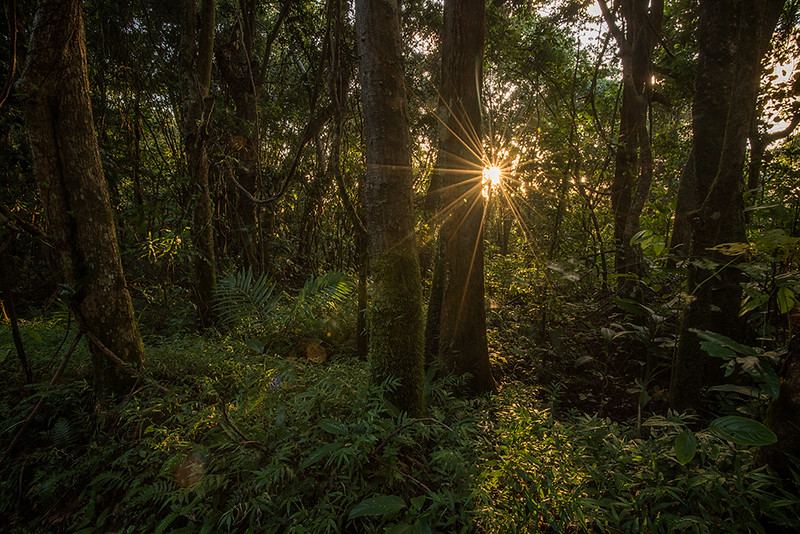 Amanece en el Bosque