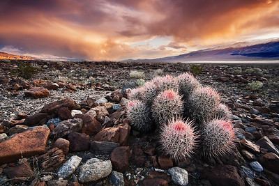 Beauty in the Desert - Varina Patel