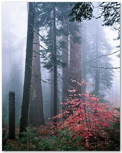 Redwood Mountain Grove V