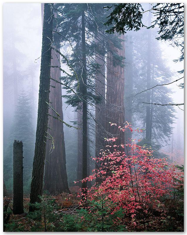 Redwood Mountain Grove V