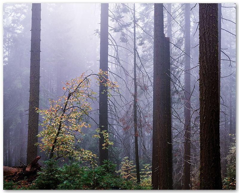 Redwood Mountain Grove III