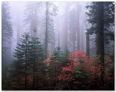 Redwood Mountain Grove II