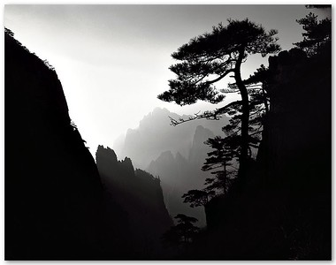 The Silhouette of a Huangshan Pine