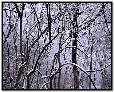Snow Curves II
