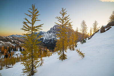 autumn larches