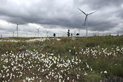Mountlucas Wind Farm, Offaly, Ireland.  Picture© Niall O'Mara 13th June 2018  - niallomara@me.com