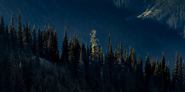 Morning light near Obstruction Point, Olympic National Park, Washington
