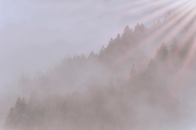 Olympic Mountain Fog