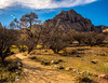 From Spring Mountain Ranch State Park in Nevada.  A landscape photographer's paradise.