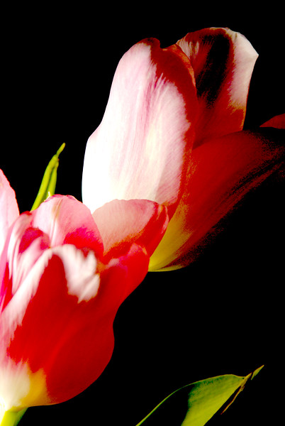 My Favorite Floral Images