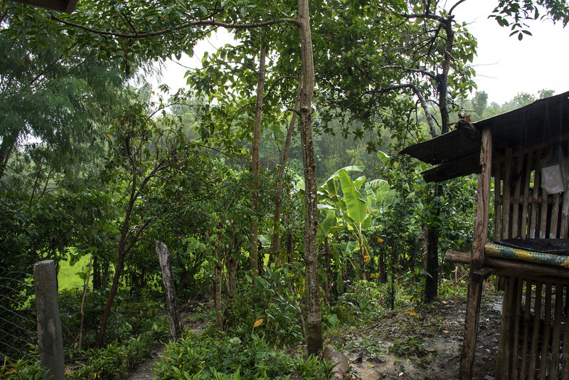 Rain in the jungle