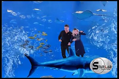 Shark Underwater