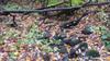 Autumn Bedecked Stream
