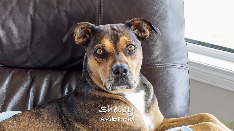 My Video Portrait of Shelby (Oct.'19)