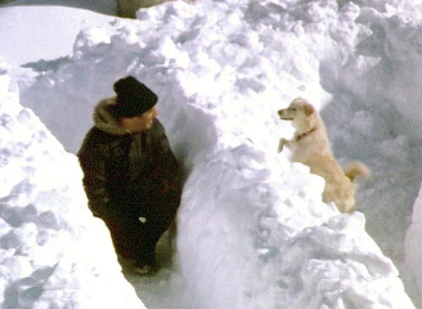 1983 NY Blizzard