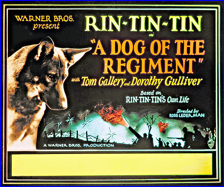 """A Dog of the Regiment (1927)<br /> <br /> Synopsis: """"Dick Harrison, a young American lawyer, goes to Germany to represent the settlement of the Waldorf estate, while the heiress, Marie, retains for her legal counsel Eric von Hagar because of his long association with the family. Dick accuses Hagar of furthering his own interests in the settlement, thus incurring his enmity, but winning the admiration of Marie and her dog Rinty. At the outbreak of war, Marie becomes a nurse and remains indifferent to Eric's advances, though he is now a captain. Dick's plane is downed nearby, Rinty extricates him from the wreckage, but Dick is captured. Eric orders him executed, forging the general's signature, but Dick and Rinty escape. Following the peace settlement, they are reunited with Marie.""""-  <a href=""""http://www.tcm.com/tcmdb/title.jsp?stid=494465"""">http://www.tcm.com/tcmdb/title.jsp?stid=494465</a>"""