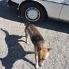 Woof, my 240Dog
