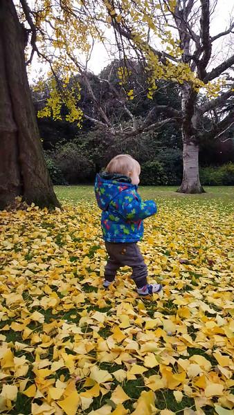 Blake Autumn leaves