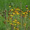 Longwood Gardens/Chantecleer Gardens/Morris Arboretum :