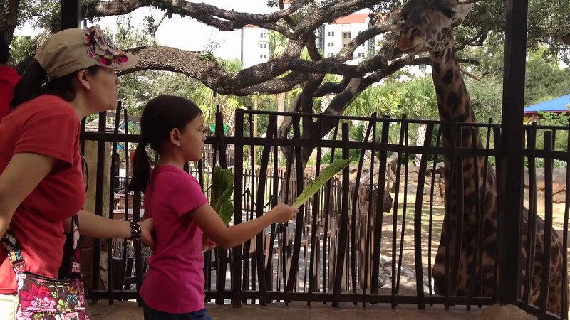 Claire Feeding the Giraffes<br /> Houston Zoo<br /> September 14, 2012
