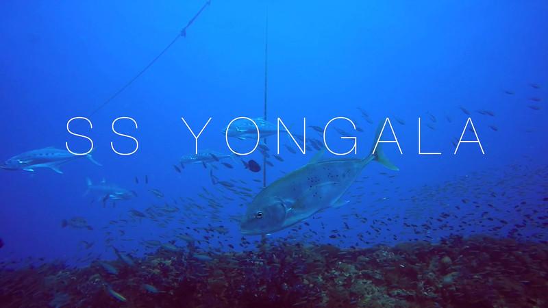 Yongala Dive Trip