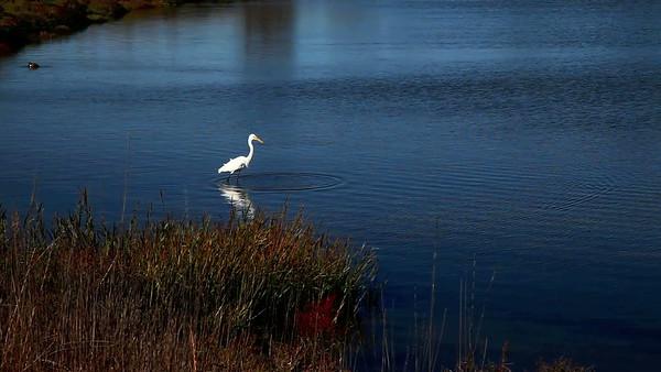 Shoreline_20140924_720p