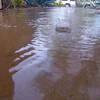 RainDrops-SlowMo-NoFlux