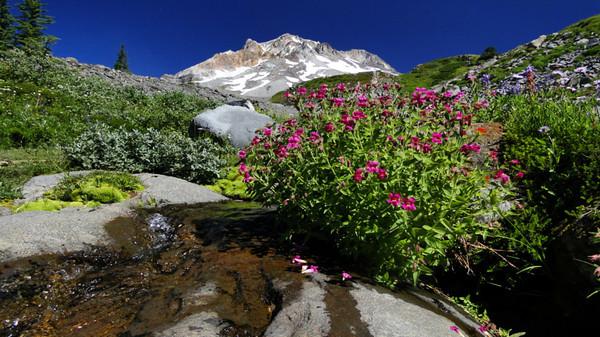 Paradise Kark, Mt. Hood. 2013/08/14