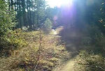 """Scott the Mountain Biker""  Scott mountain biking in Leavenworth in October."