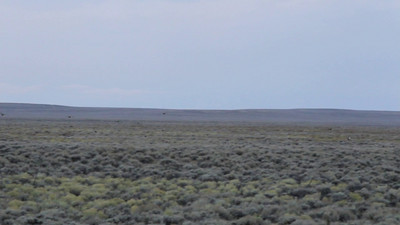 Grouse Hawking in Western Wyoming