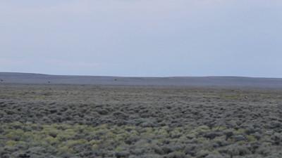 Grouse Hawking in Western Wyoming