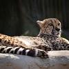 Philadelphia Zoo :