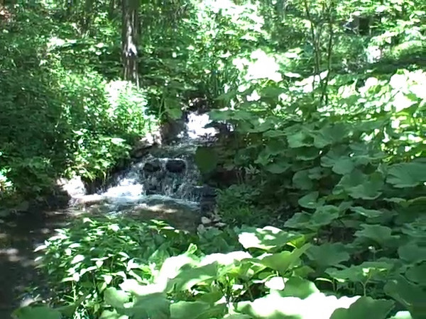 A couple of the small waterfalls at Powell Gardens inside the dense shade of the waterfall garden.<br /> *29 seconds long*