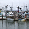 gray's harbor fishing boats