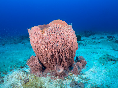 Barril Coral