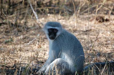 Mpumalanga - September 2006