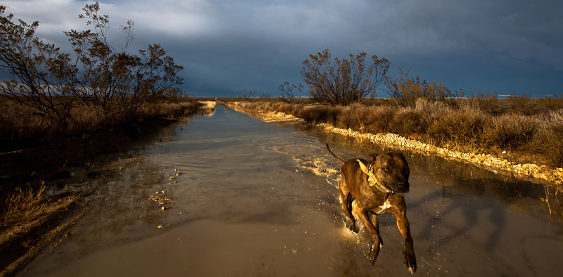 """After the rains, running down the road at """"The Oasis"""", Texas"""